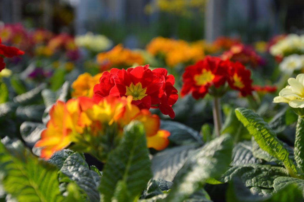 Piante da interno e piante da esterno garden filippi ssa for Piante colonnari