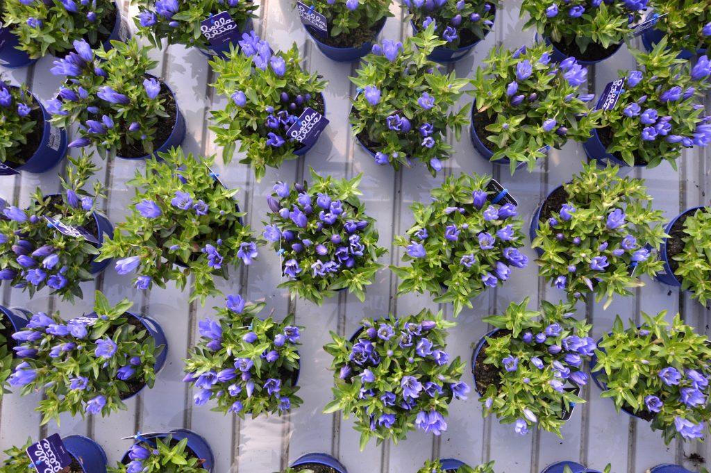 Piante da terrazzo perenni idee per interni e mobili for Piante da terrazzo sempreverdi